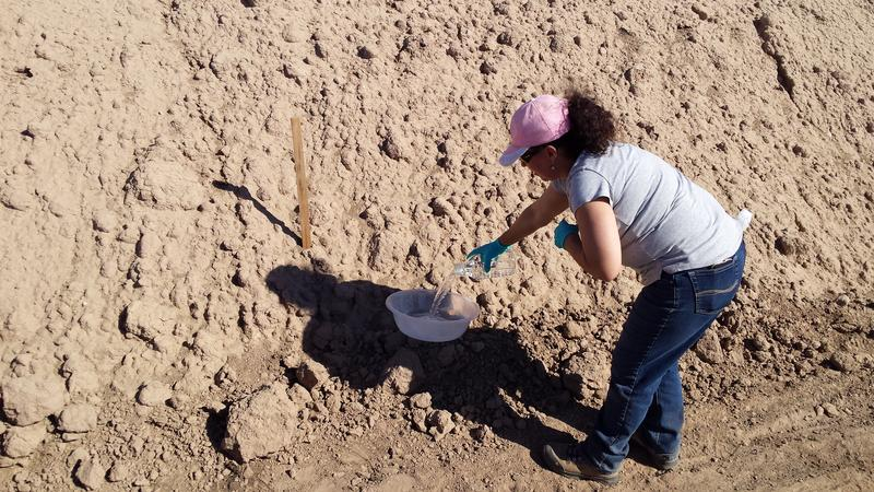 Dr. Paula Rivadeneira sets out a bucket of water to collect dust which may be carrying pathogens
