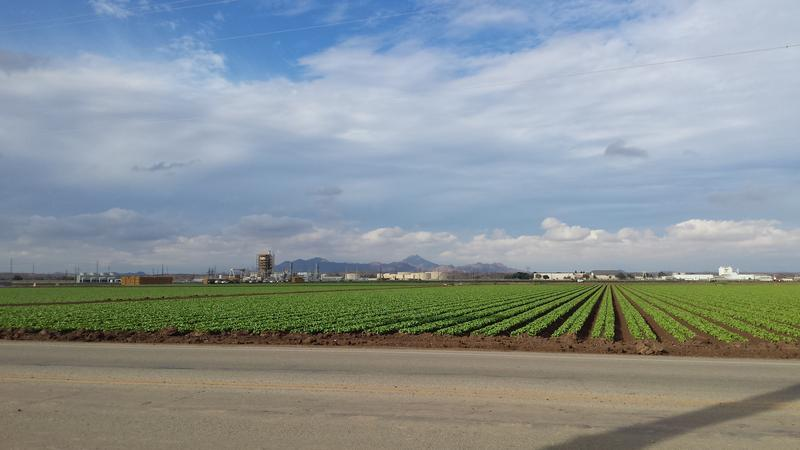 Yuma agricultural fields during the season