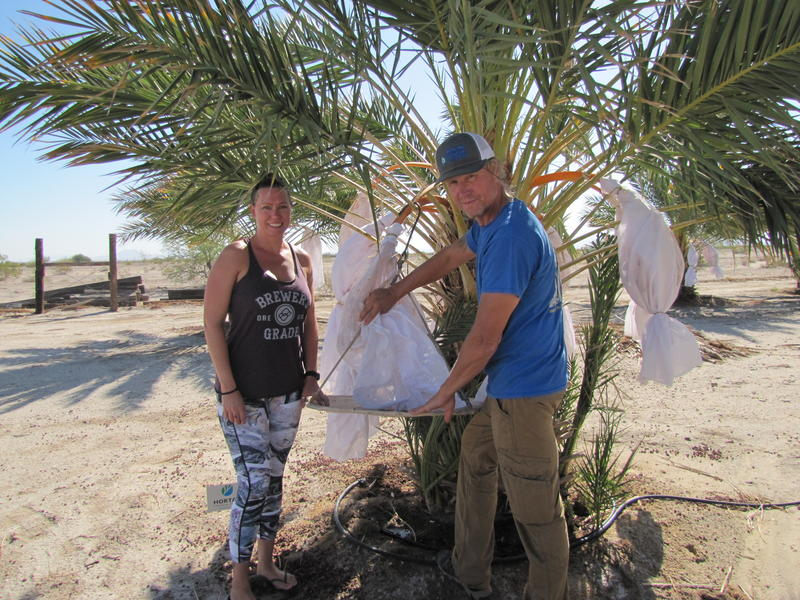 Mastin (left) and Limmeroth (right) stand in front of a date palm with an unbagged date cluster