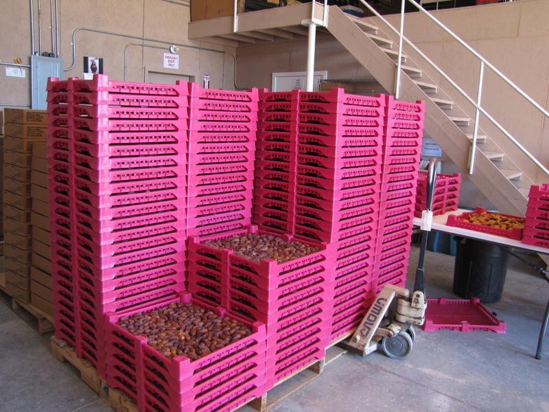 Palettes of dates in the packing house