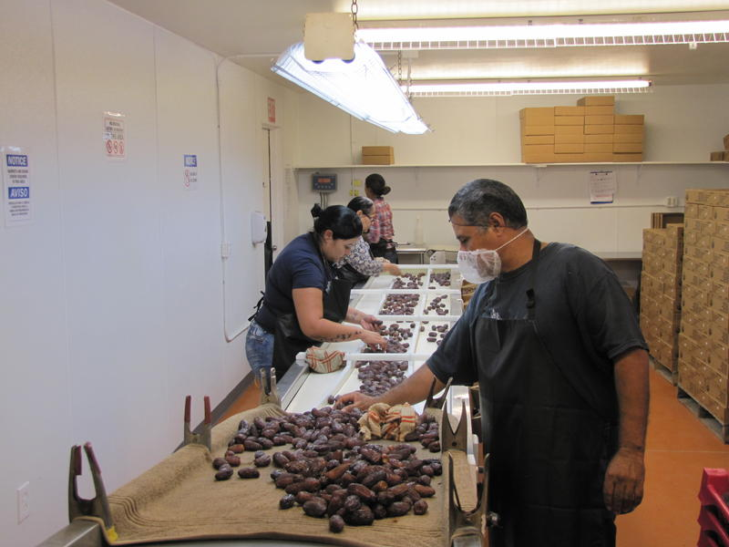 As they make their way down the conveyor belt, Naked Dates employees separate dates based on quality for packing