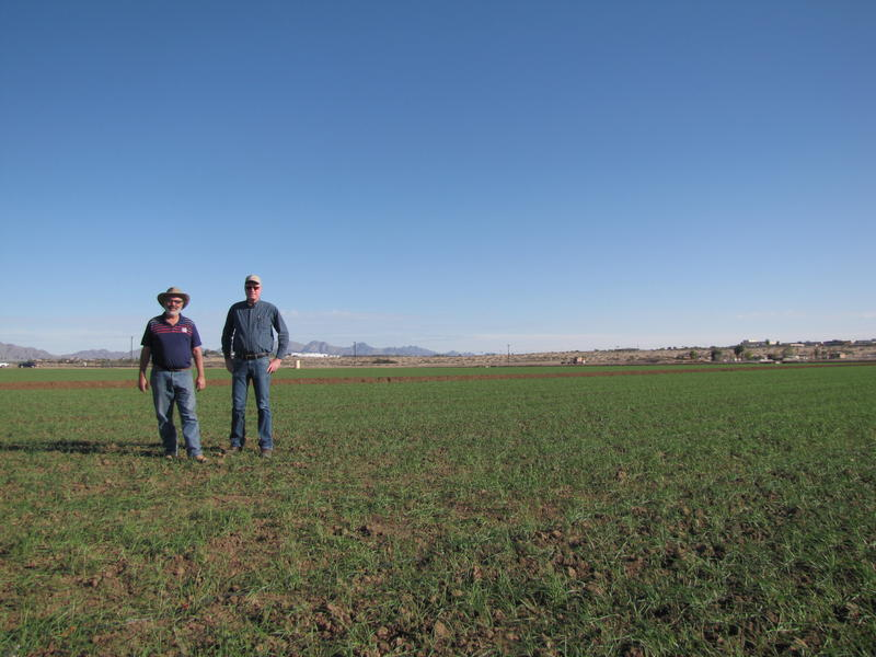 Dr. Charles A. Sanchez (Left) stands beside Paul Brierley, the Executive Director of the Yuma Center of Excellence in Desert Agriculture (Right), in a field planted with durum wheat