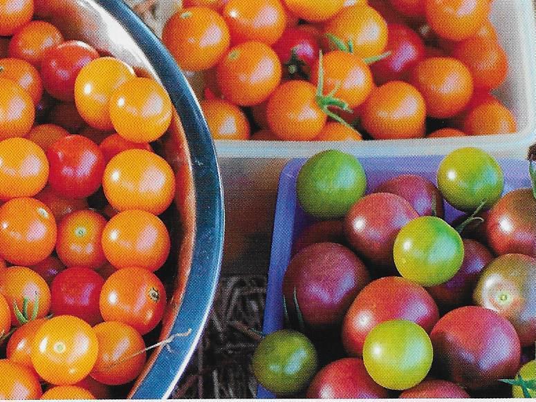 Petite tomatoes