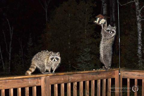 Fin Bay Bandits