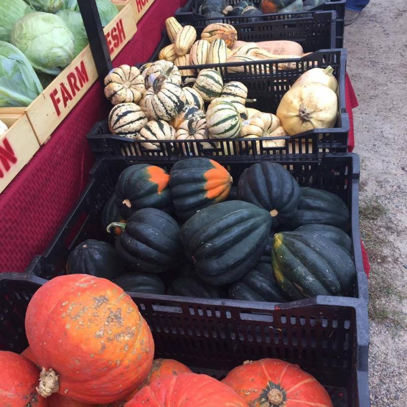 Fall produce--Squash!