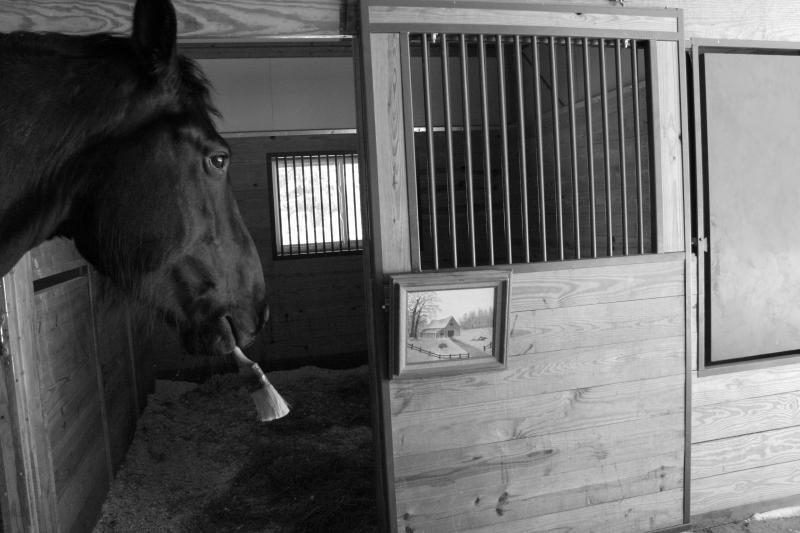 Talented horse! Aspen Falls Farm