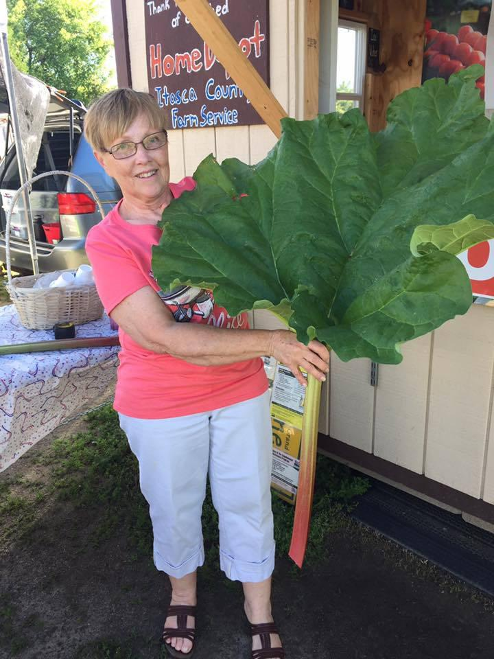 Winning Rhubarb Leaf--so far!