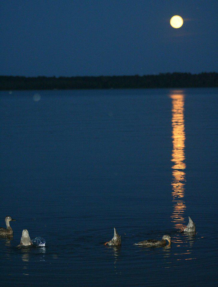 Ducks, Moon, Lake Bemidji