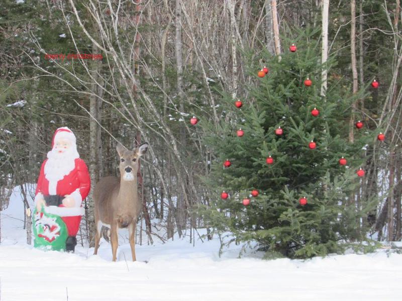 Santa and his deer
