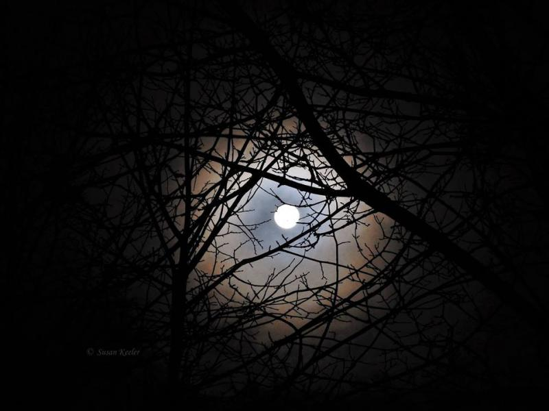 Moon Thru Trees and Clouds