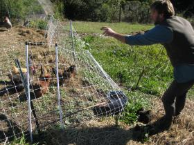 Delmar McComb feeds the chickens on his Bonny Doon farm.