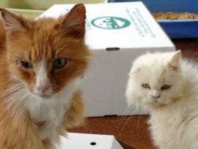 Cats seized during the Monterey animal hoarding investigation.
