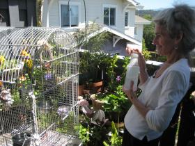 Gloria Sams cools down her pet birds on her balcony in Santa Cruz.