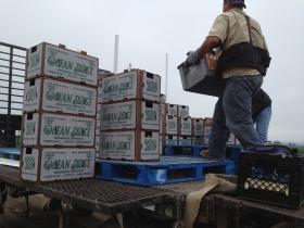 Workers stack boxes of freshly picked Brussels sprouts at Ocean Mist Farms in Castroville.