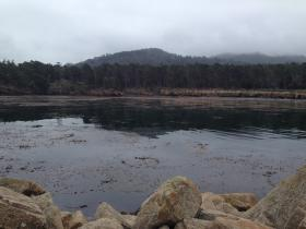 Whaler's Cove at Point Lobos