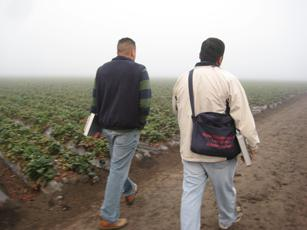Migrant Education Workers leave a strawberry field after recruiting for their programs.