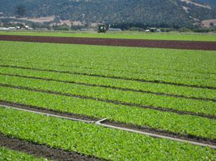 Earthbound Farm field in San Juan Bautista