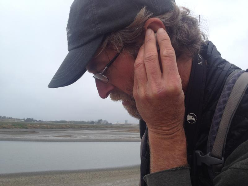 Point Blue biologist Carleton Eyster listens for a chick tapping on the egg shell.