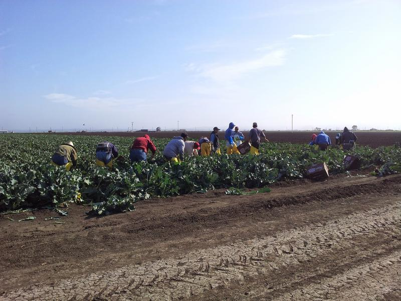 Many field workers in the Salinas Valley follow the harvest.  The Monterey County Office of Education's Migrant Program helps their children stay connected to education services.