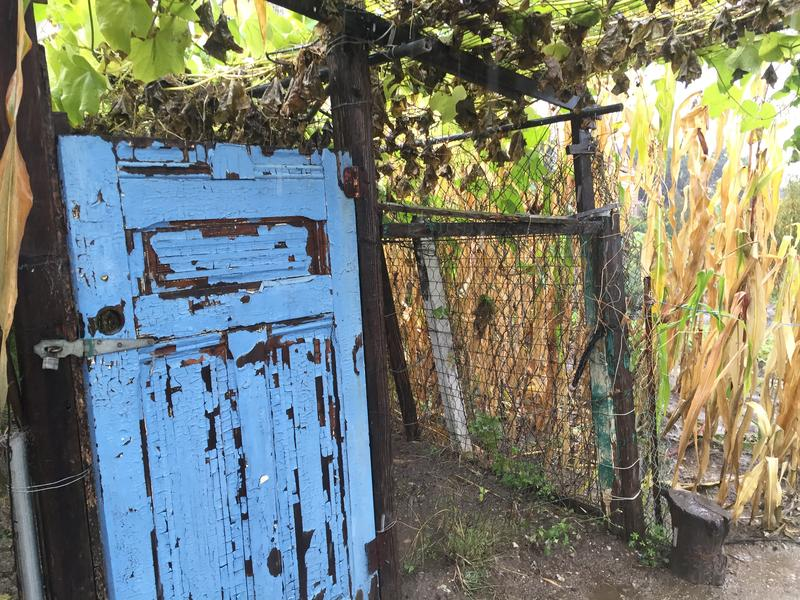 A fence and locked door surround one plot in the garden.