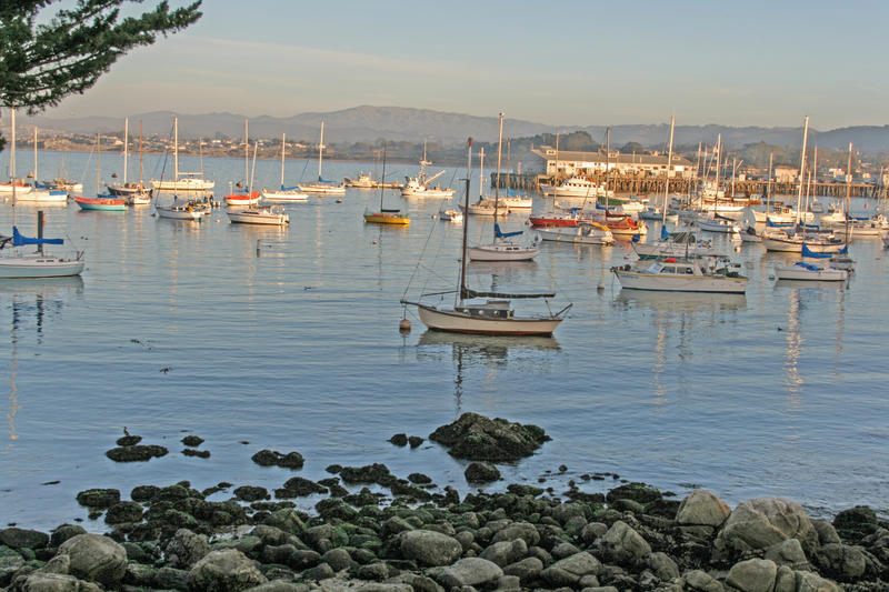 The Monterey marina and commercial wharf