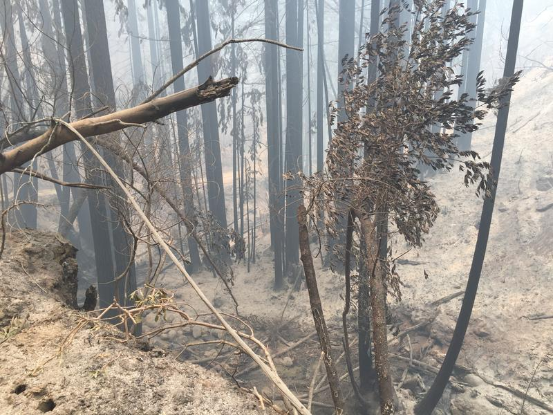 Fire investigators now say an illegal and unattended campfire caused the Soberanes Fire.