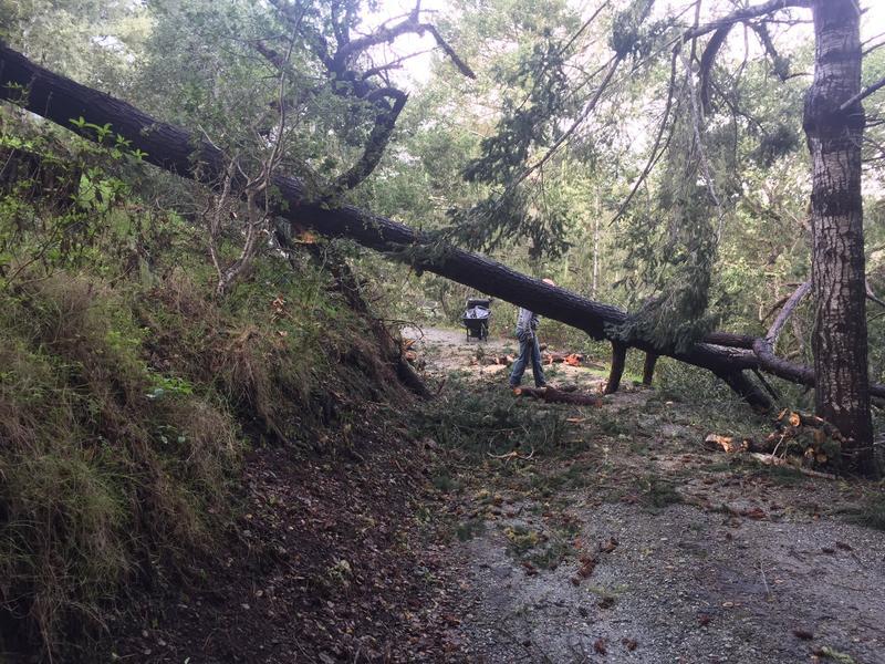Residents clear a downed tree in Jacks Peak outside of Carmel.