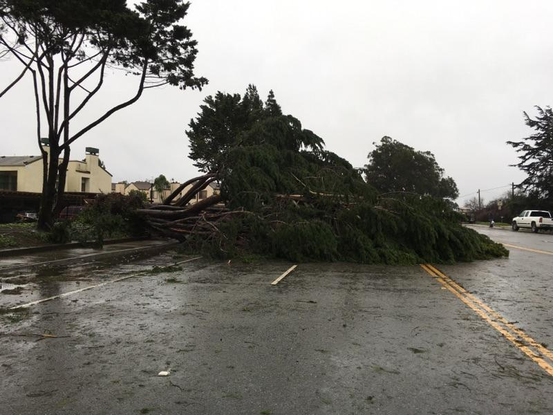 Tree down on North Main Street in Salinas.