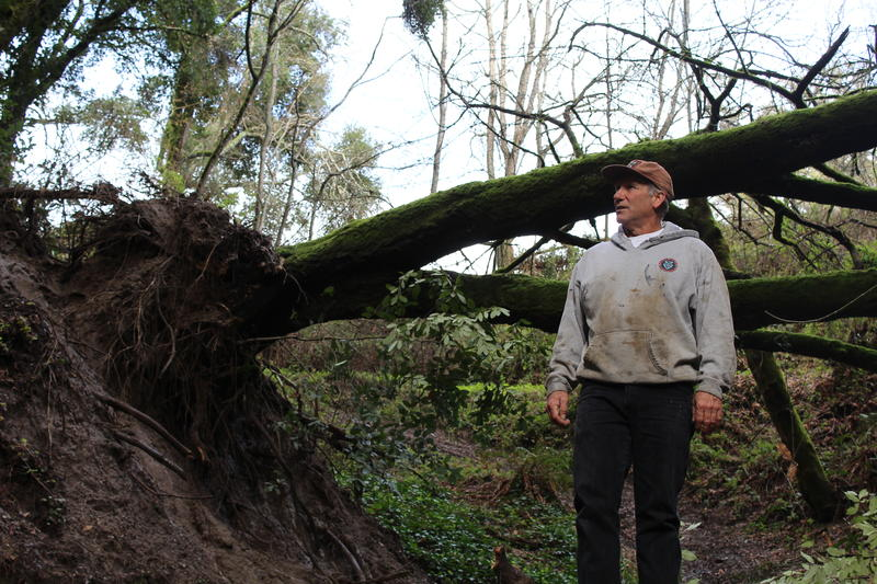 Greg Prussia stands in front of a downed tree on his property in rural, unincorporated Santa Cruz County.