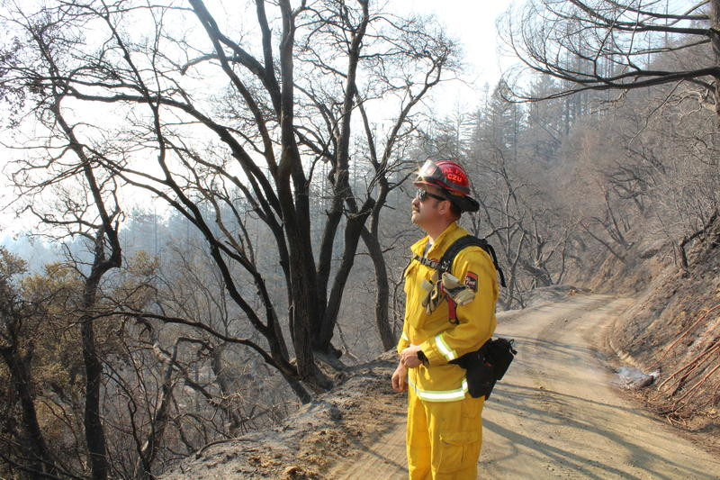 CalFire's Jordan Motta looks out at the burned terrain .