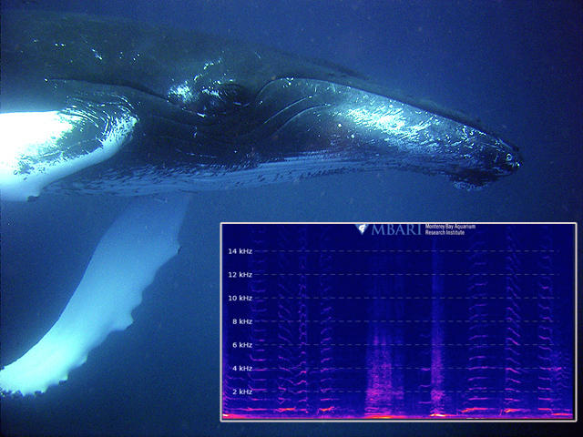 The Monterey Bay Aquarium Research Institute has released a live stream of audio from a hydrophone. It captures sounds of the deep sea, up-close and from the surface.