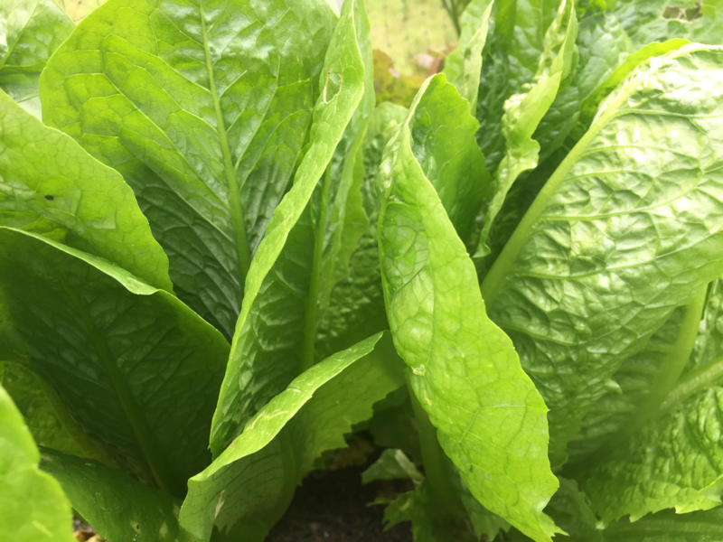 The FDA and CDC are advising people to not buy or eat romaine lettuce unless they know it's not from Arizona.