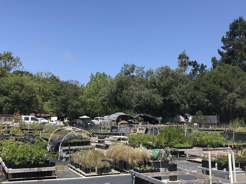 Santa Cruz city leaders encourage people to plant drought-tolerant plants. Dozens are sold here at Central Coast Wilds in Santa Cruz.