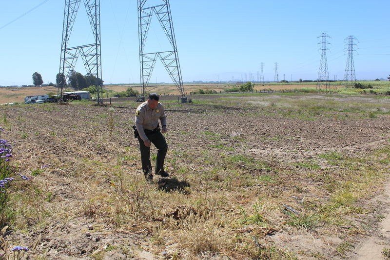 Commander John Thornburg says after deputies discovered this first field of opium poppies, tips from the community led them to the seven other fields.