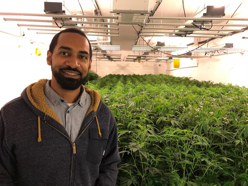 SCVA Director of Communications Seth Smith in one of the Santa Cruz Veterans Alliance's grow facilities.