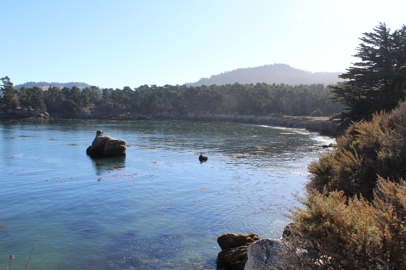 Whaler's Cove is a beloved destination spot at Point Lobos. All kinds of marine animals can be spotted here. It's also a popular spot for divers.