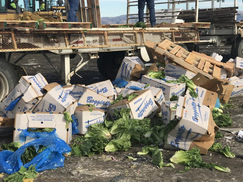 Farms near the Monterey Regional Waste Management District have been dumping truckloads of romaine lettuce at the landfill over the past two weeks.