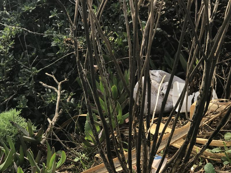 Careless tourist behavior can lead to problems like littering instead of packing trash out. Here, a diaper was thrown down a cliffside.