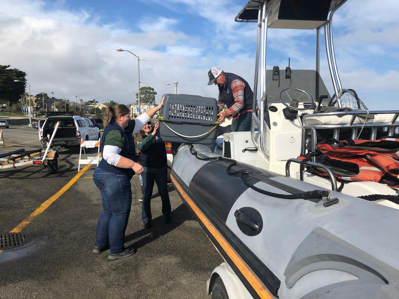 From left to right: Dr. Kara Field, Michelle Staedler and Karl Mayer load the sea otters into the boat.