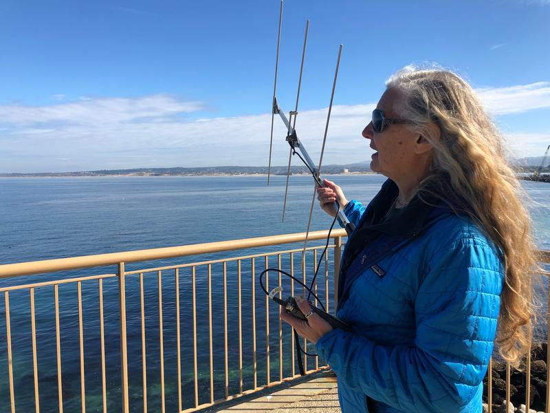 Michelle Staedler tracks the otters' signal from a hotel balcony on Cannery Row.