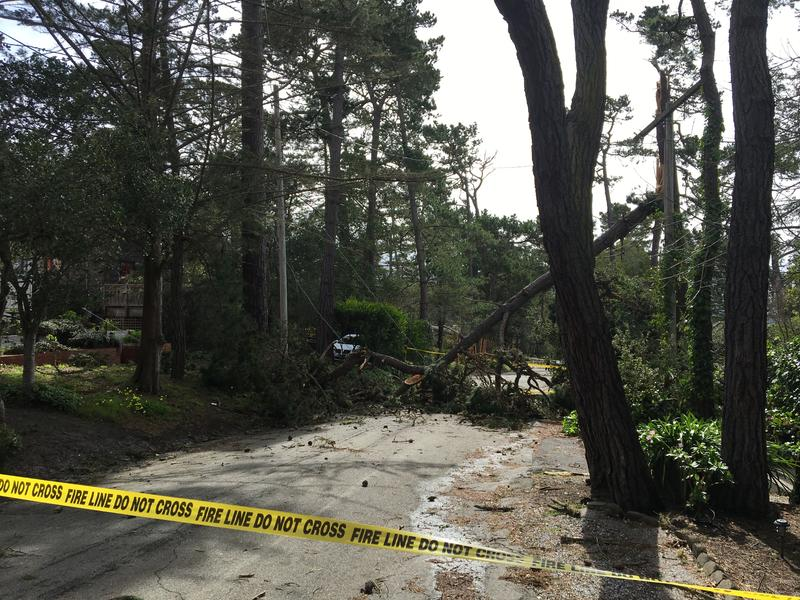 Gusty winds brought several trees down throughout Carmel. Resident Mark Governor took this picture on 1st and San Carlos.