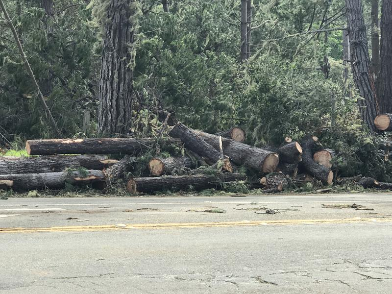 Tree trunks and piles of branches sit on both sides of Highway 1 near Point Lobos.