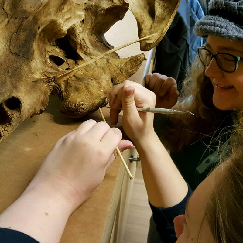 Mercedes Becker and Amber Jackson use dental tools to clean and repair the skull.
