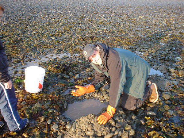 As part of the first ever Alaska statewide monitoring program for marine toxins, Bruce Wright, with the Aleutian Pribilof Island Association, holds up a small butter clam on a Sand Point beach in the Aleutian Islands.