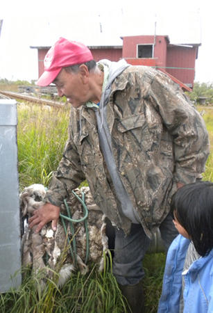 To help reduce the cost of using electric heat tapes around a connection between his home and water and sewer lines damaged by melting permafrost, Jack Snyder insulates the connection with a caribou hide. In Selawik, water and sewer is $180 a month per ho