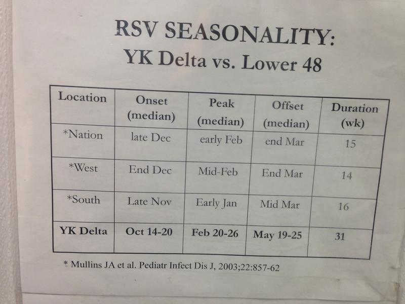 A contagious virus that causes colds in adults can turn into severe respiratory infections in babies. As this information posted in a health clinic shows, RSV has a much longer active season in the Y-K delta region than other places.