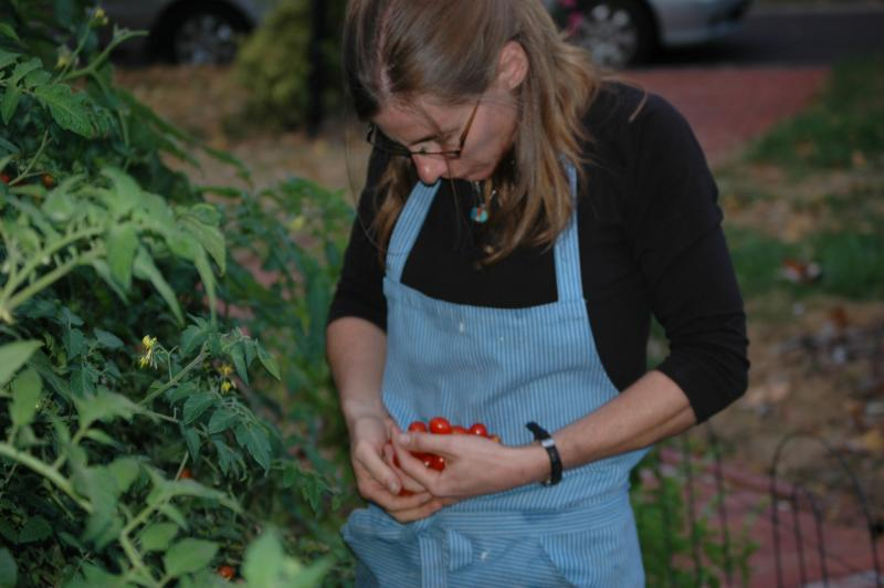 Ann Koenig collects tomatoes from her backyard garden as part of the Woods to Table project.