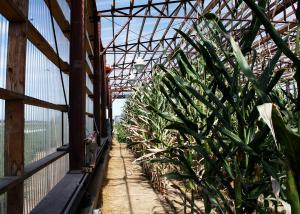Inside the University of Missouri's drought simulator, or a massive greenhouse on wheels, where crop scientists are mimicking high temperature, low rainfall conditions to research a stronger, drought resistant plant.