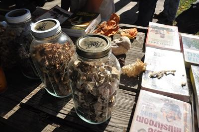 Jars of mushroom samples sit on a picnic table for display.