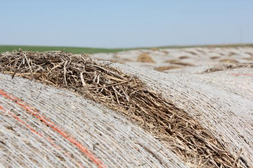 In southwest Kansas, baled hay sits in an open field.
